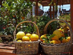 In einer Orangensaftbar