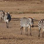 In fila... africana!!