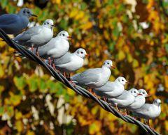 in fila d'autunno