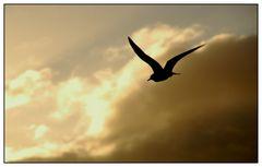 In flight - In der Luft