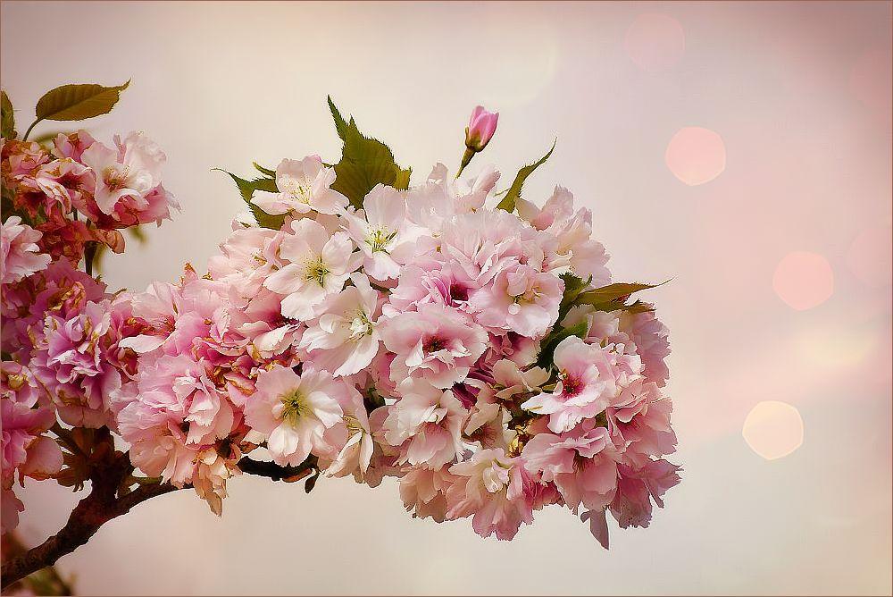 ... in flower