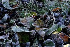 In Frost gebettet