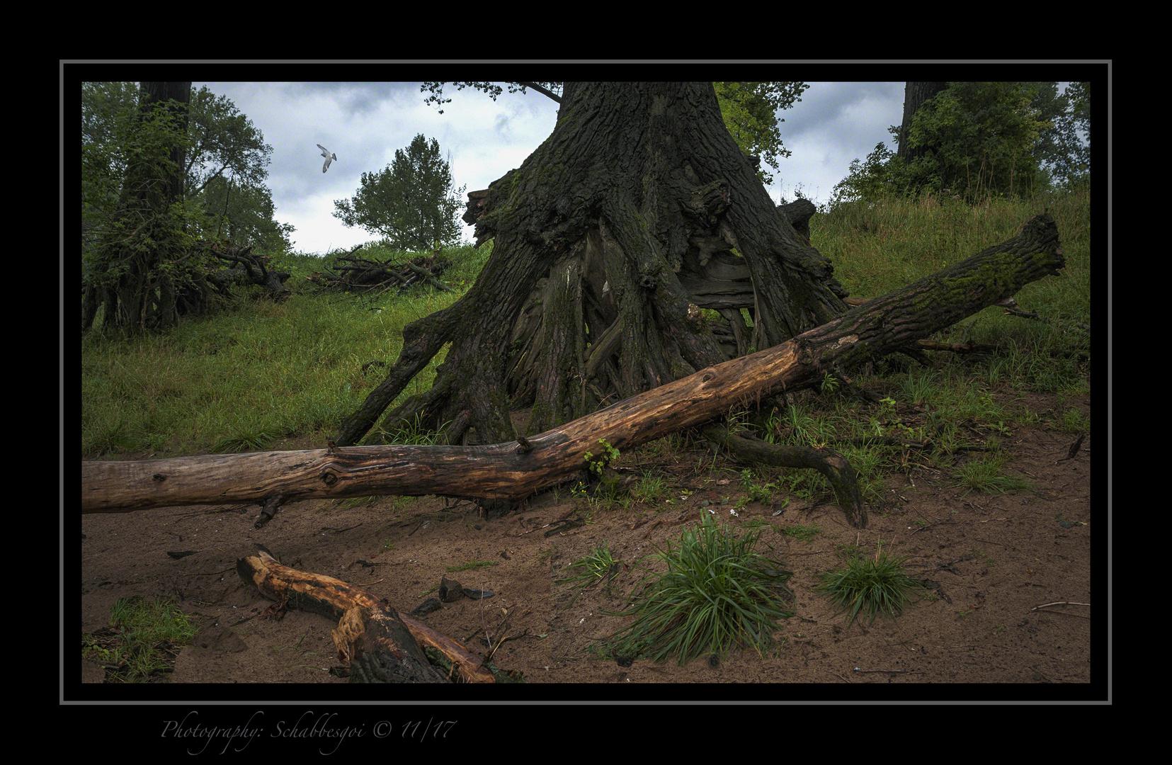 In jedem Baum wohnt ein Geist