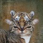 In jeder Katze steckt ein Tiger