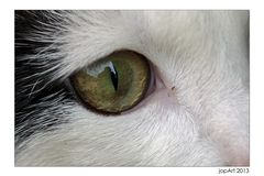 In Kittys Augen...