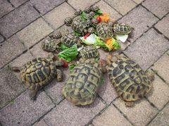in Kreis voller Schildkröten