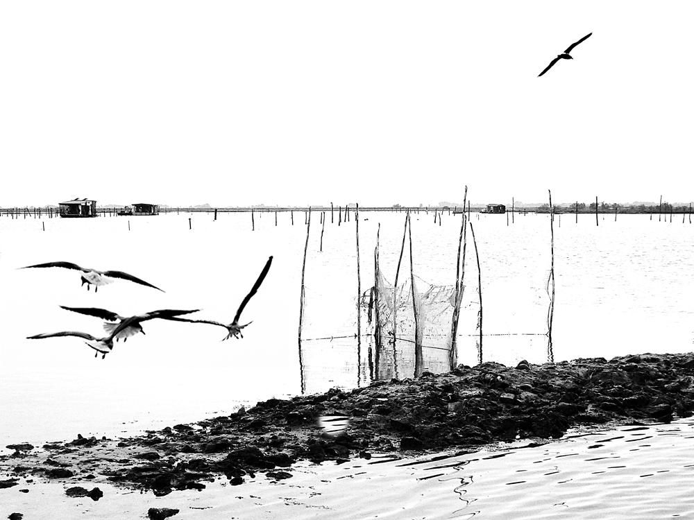 ...In laguna