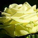 In liebevoller Erinnerung an Elfriede