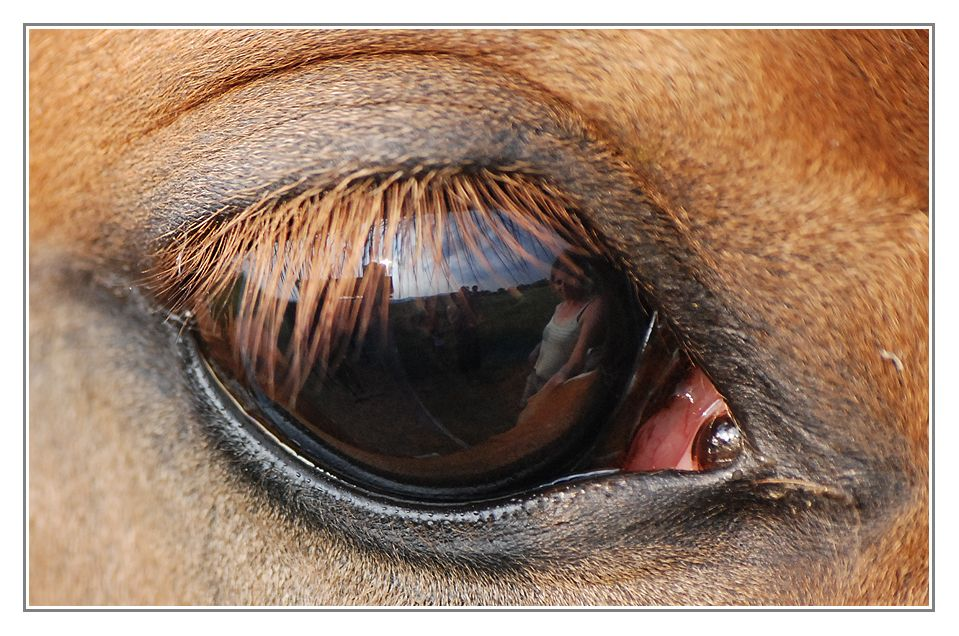In Lilly´s Auge...