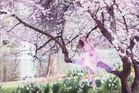 in love with cherry blossoms