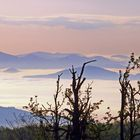 """In meinem """"böhmischen Fotoleben"""" sind solche Morgenbilder  Höhepunkte, wenn..."""