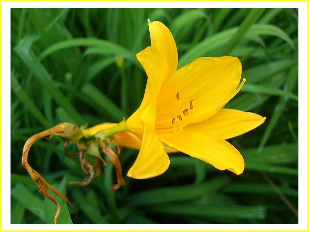 - in meinem Garten -