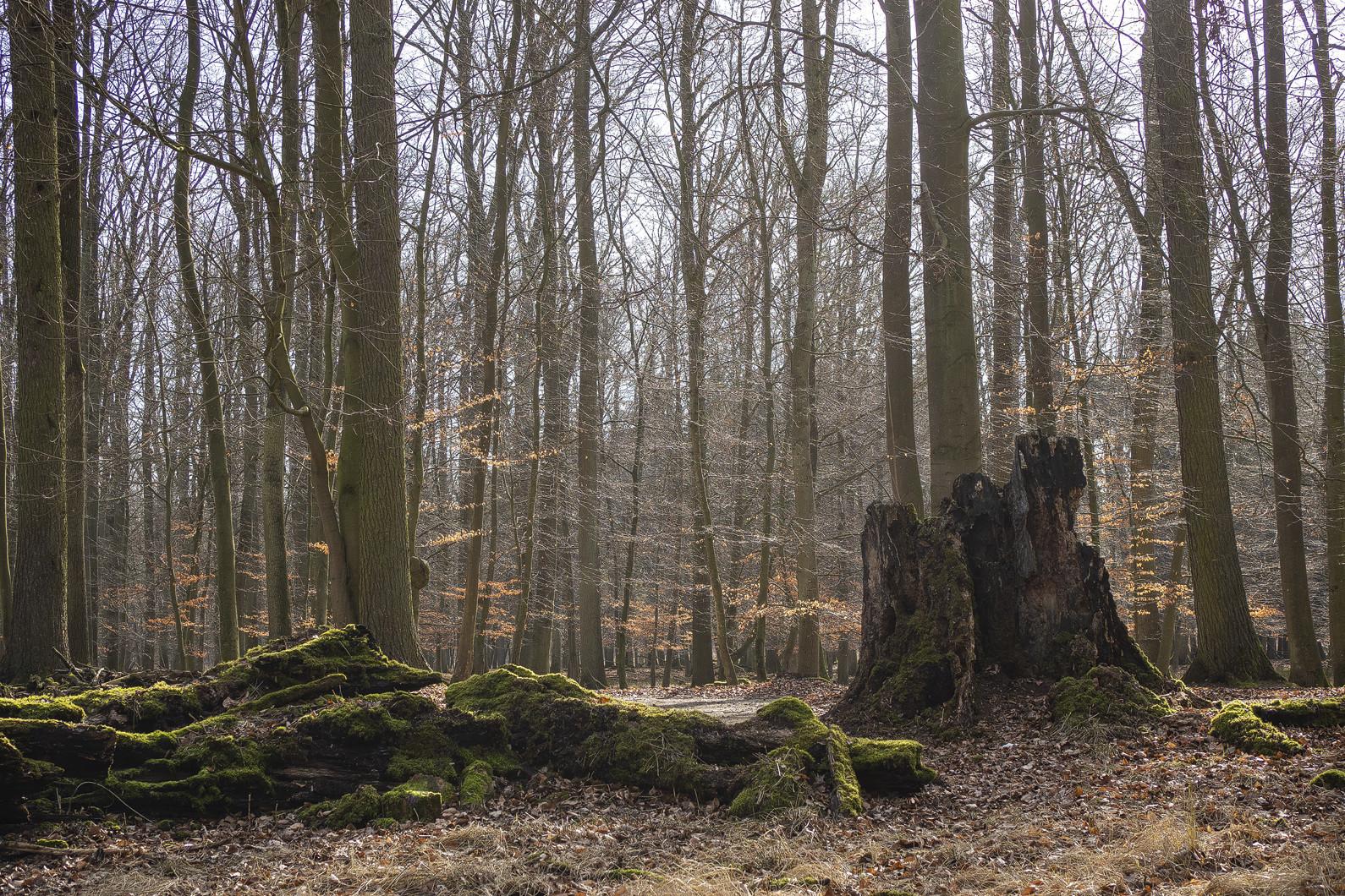 """In """"meinem"""" Pilzwald.."""