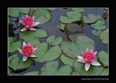 In meinem Teich
