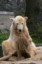 In Memoriam: Knut XI