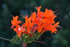 in orange - rot