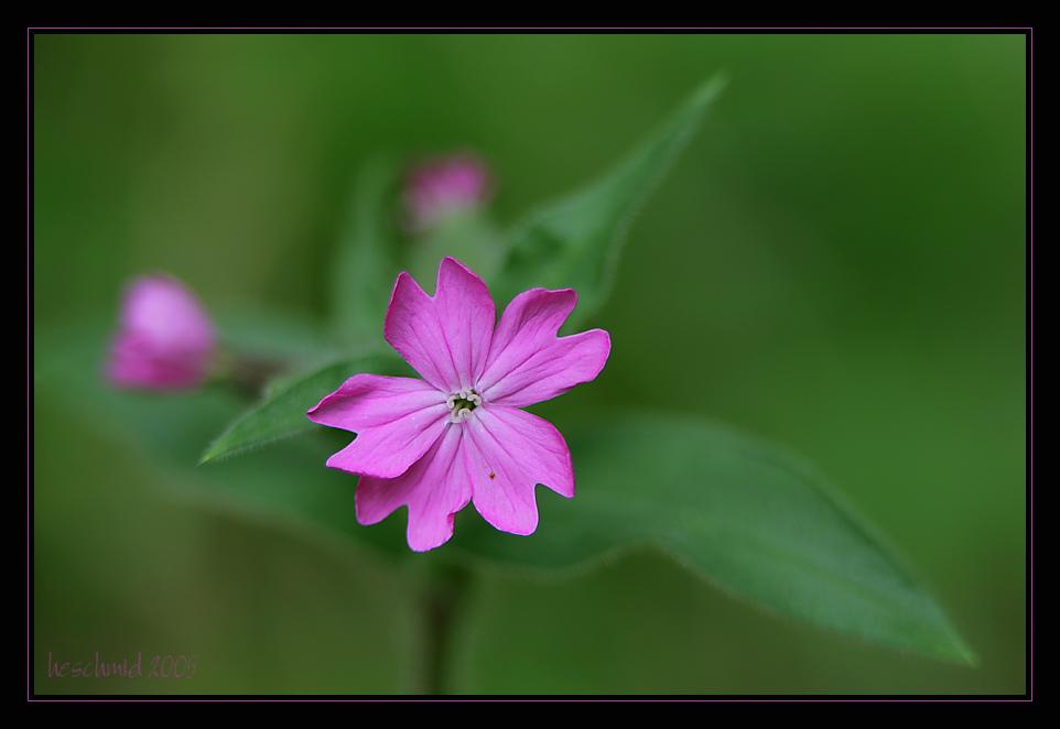 in pink II