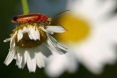 In Pollen gebadet....