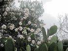 In Puglia