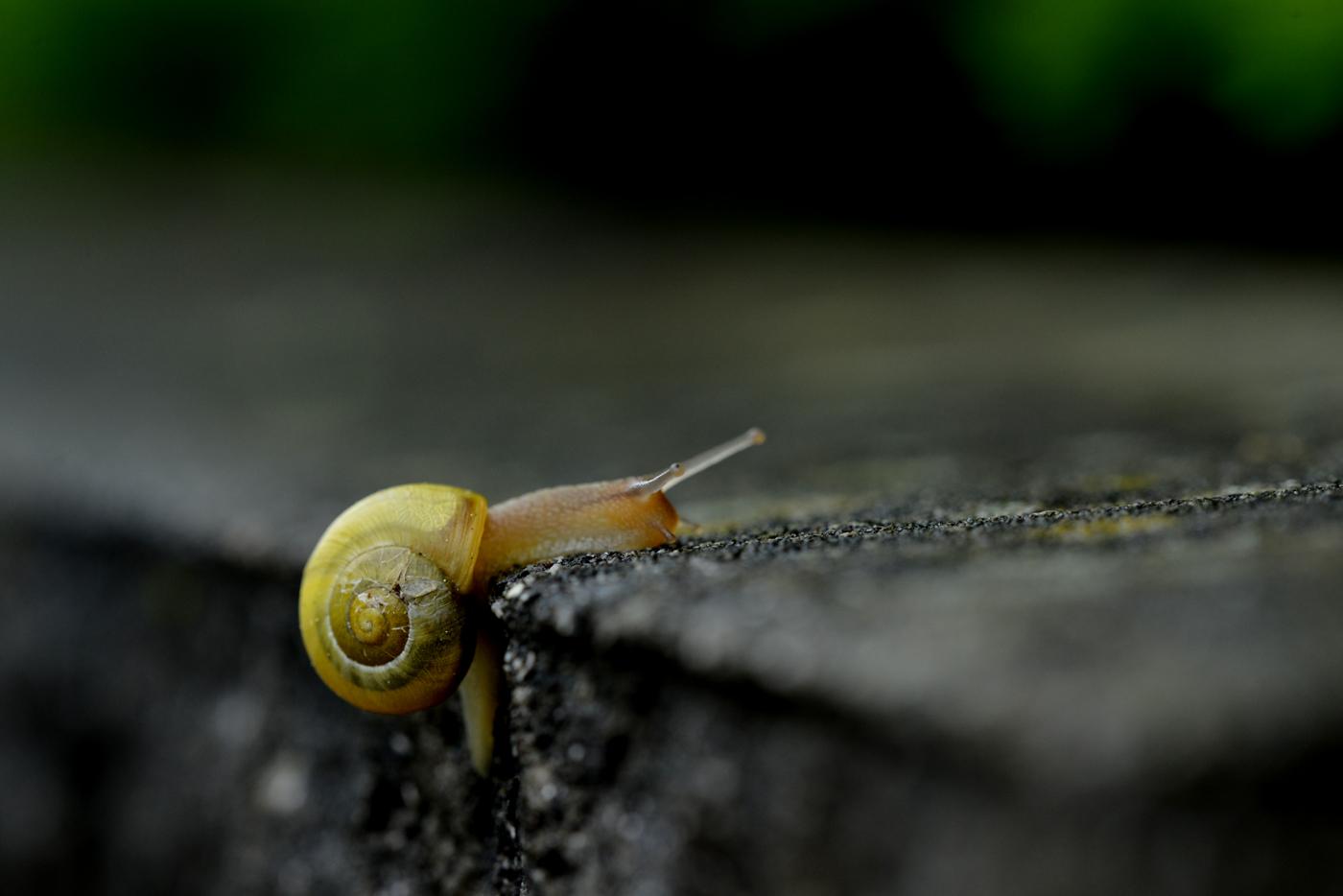 in Regen