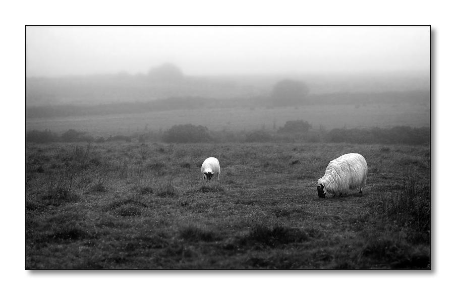 In the Bodmin Moor