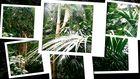 In the jungle I