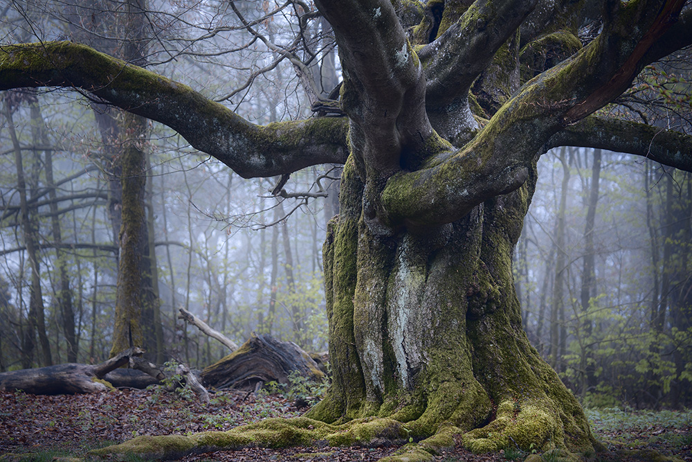 In the mystic forest ...
