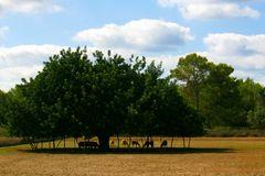 In the shade - Im Schatten
