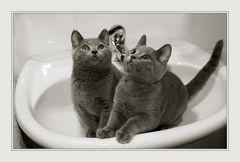 ... in the washbasin ...