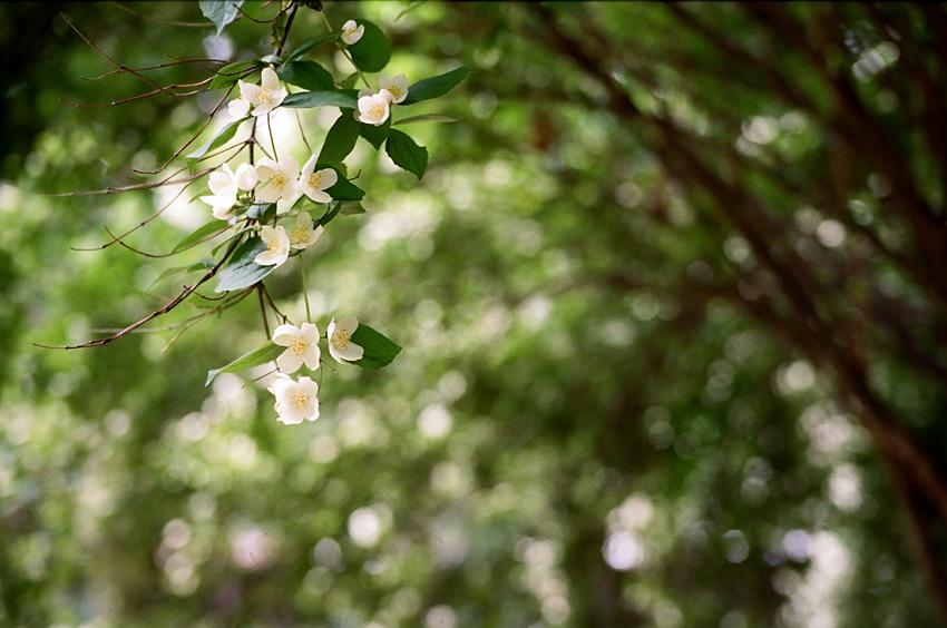 In Tolstois Garten