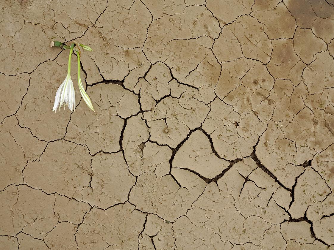 In trockener Erde / In terra secca