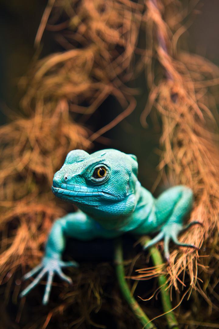 in t rkis foto bild tiere wildlife amphibien reptilien bilder auf fotocommunity. Black Bedroom Furniture Sets. Home Design Ideas