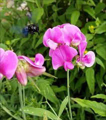 In unserem Garten...