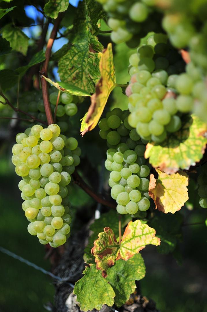 In Vino Veritas - auf einen guten Jahrgang