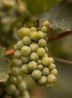 in vino veritas - Part II