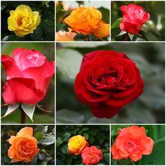 In voller Blüte...