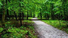 In Wald beim Regen...