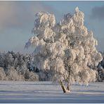 In WinterWonderLand