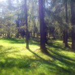 In zartem Grün der Wald
