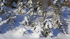 In Zinnwald ganz oben sah der Winter so aus