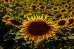 inchino al sole (1)