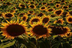 inchino al sole (2)