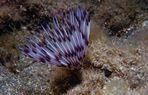 Incontri subacquei (1)