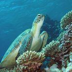 Incontri subacquei (16)