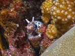 Incontri subacquei (3)