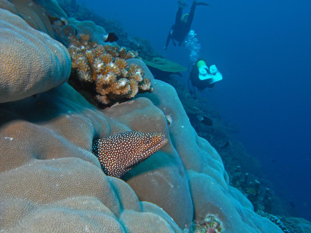 Incontri subacquei (4)