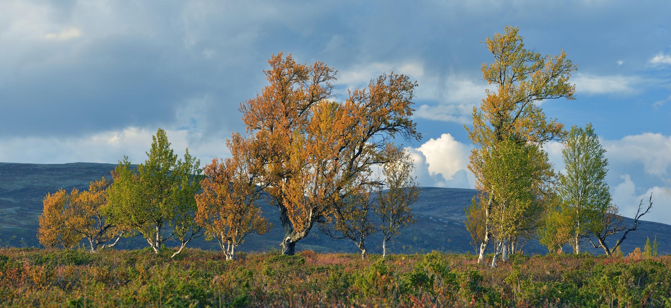Indian Summer in Norwegen, September 2013_03