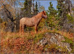 Indian Summer Pony