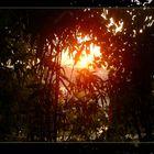 Indische Sonne