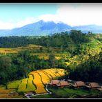 INDONESIE -21- Ile de Bali
